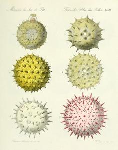 german pollen